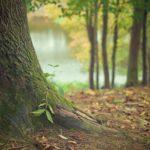 Przepiękny i {schludny zieleniec to nie lada wyzwanie, szczególnie jak jego konserwacją zajmujemy się sami.